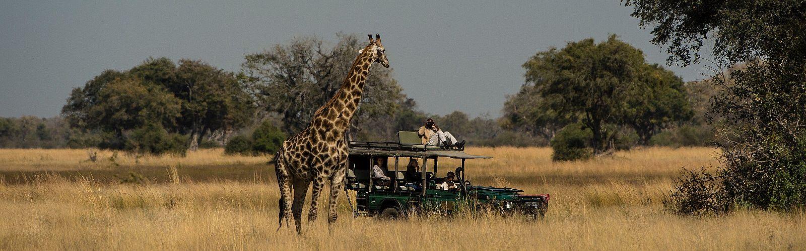 Safari Seregenti Tanzania
