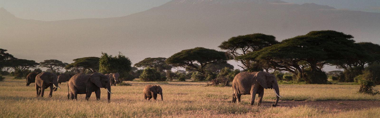 Safari Serengeti Tanzania