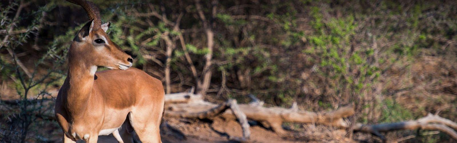 Malariavrije wildparken