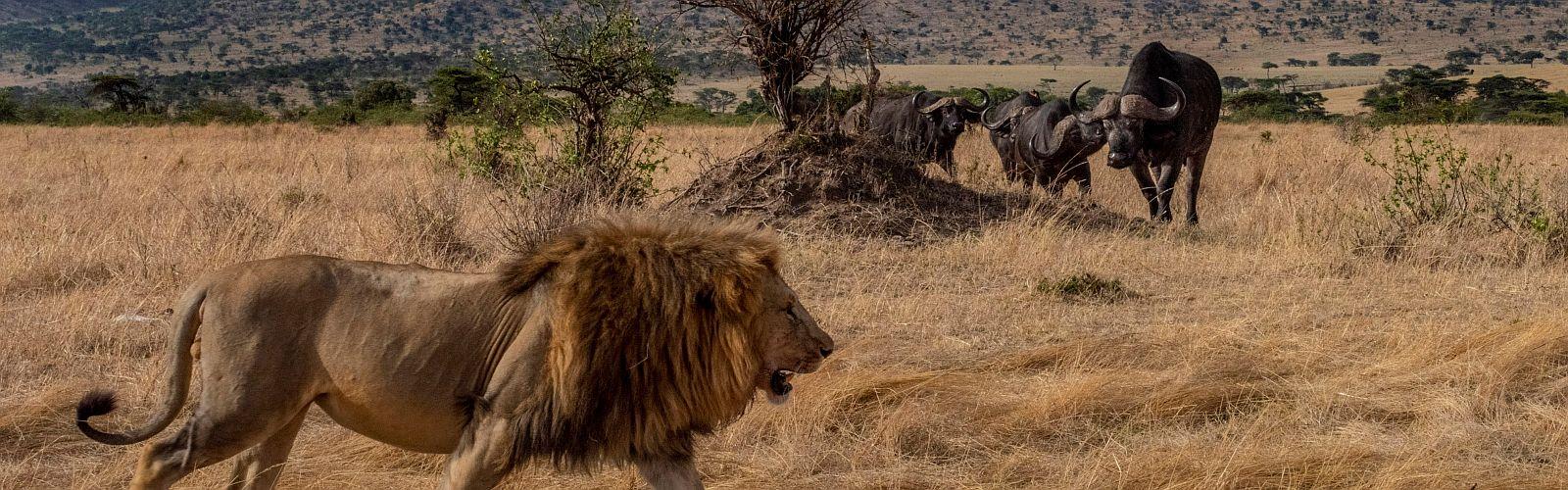 Avontuurlijke safari