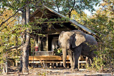 Safari Olifant voor lodge
